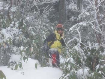 20081130nekoyabu.jpg